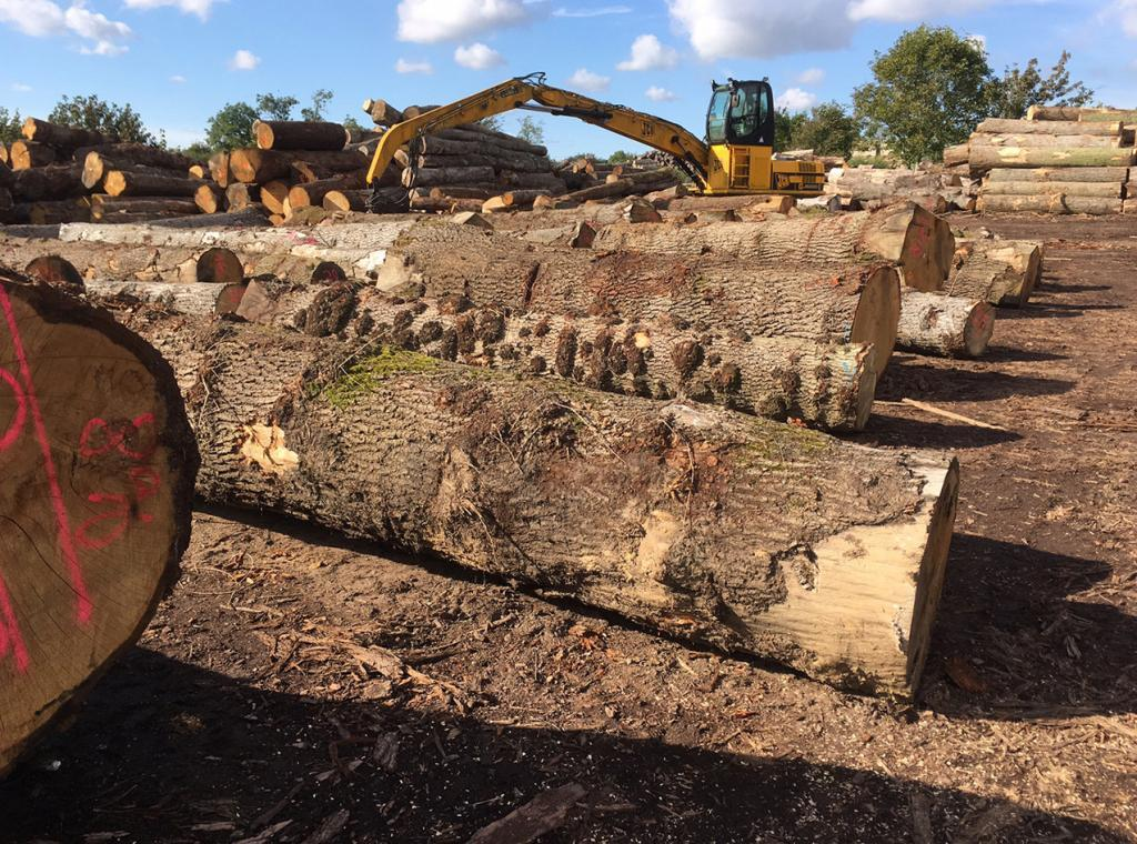 a lovely selection of scottish pippy oak logs ready for sawmilling