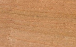 elm timber sample from english woodlands timber