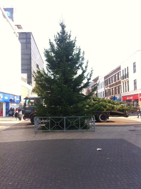 CHRISTMAS tree supplied and installed by english woodlands forestry