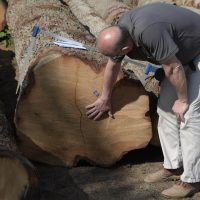 tom selecting logs to be sawn into air dried boules