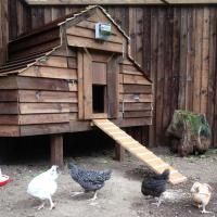 MHW Design bespoke chicken coop