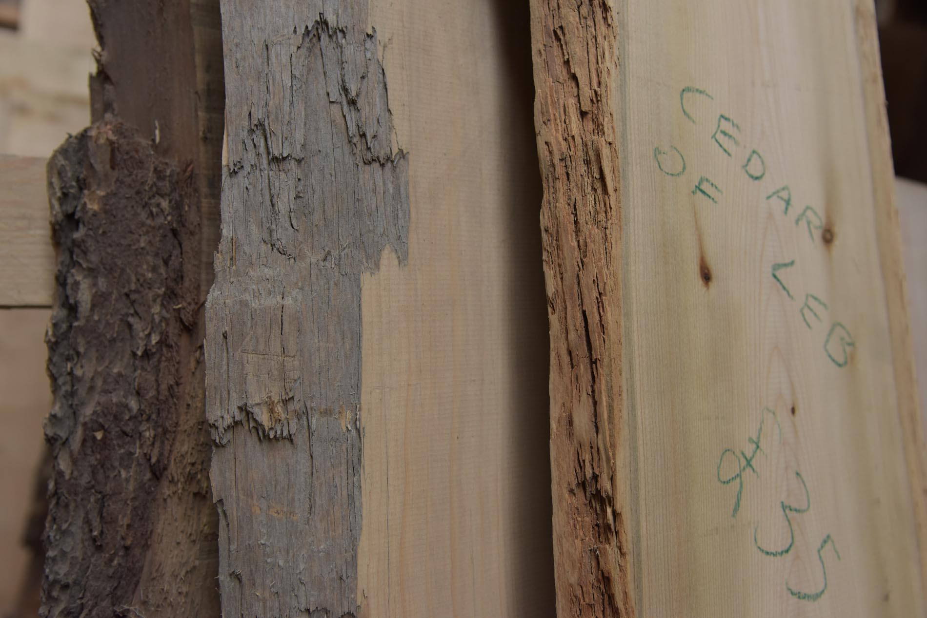 debarked edges of natural edge cedar of lebanon and sycamore in the rack ready for the timber sale