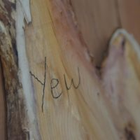 wild waney edge english yew crown board with curved edges, deep colouring and big grain in the timber rack