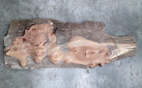gnarly elm board no.1000773 for sale in the shop