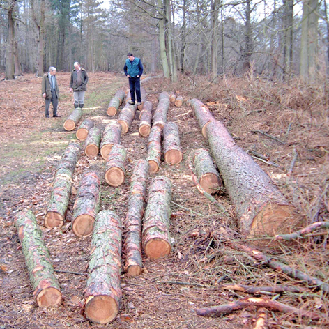 Tom selecting larch logs at winders great park crown estate